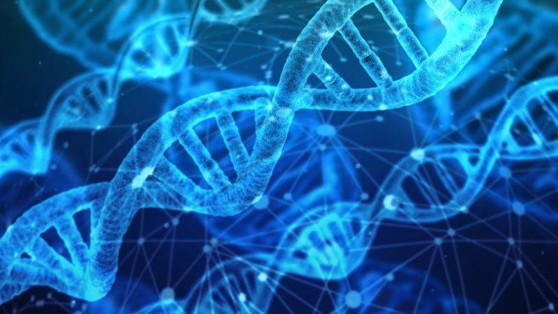 Gen beeinflusst die Fettleibigkeit