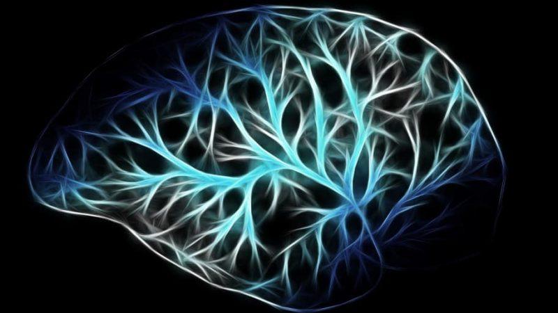 Nervenzellen sind an der Kontrolle von  Stoffwechsel beteiligt